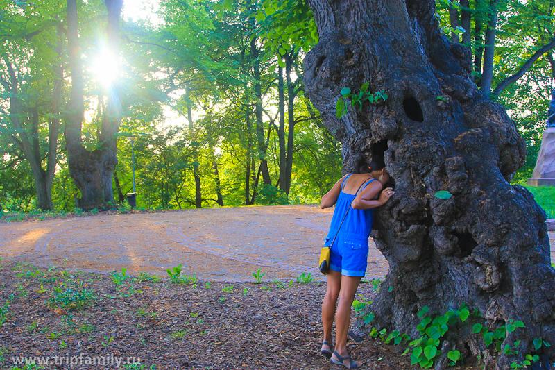 Или попытаться найти хозяина удивительного дерева)